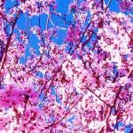 """blossom3"" by capturedmoment"