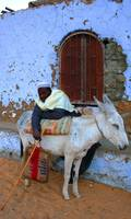 Man Leans on Donkey