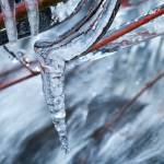 """Icy twigs 2"" by nakedeyephotography"