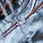 """Icy twigs 3"" by nakedeyephotography"