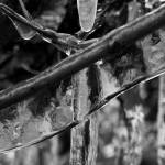 """Icy twigs B&W"" by nakedeyephotography"