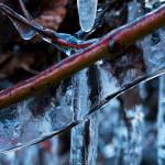 """Icy twigs"" by nakedeyephotography"