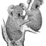 """Koalas"" by DHMoynahan"