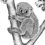 """Potto"" by DHMoynahan"