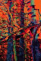 Abstract Poplars 1259