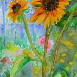 """Taos Sunflowers"" by BHT"