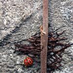 """Ladybug"" by tracyjade"