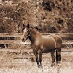 """""""Happy Horse"""" by kimberlyrenee"""