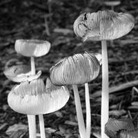 Mushrooms 236
