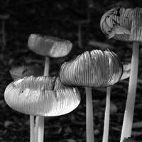 Mushrooms 251
