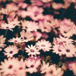 """Flower Power"" by OmairHaq"