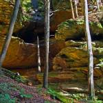 """Wooded Ravine in Hocking Hills"" by KsWorldArt"