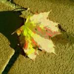 """""""Leaf"""" by TheSilverFox"""