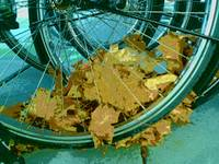 Wheels and Leaves