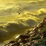 """Golden Gull"" by KenHigginsPhotography"