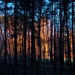 """forest near  Roth Bavaria at sunset"" by redakteur1"