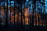 forest near  Roth Bavaria at sunset