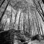 """forest near Bayreuth Bavaria"" by redakteur1"