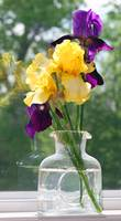 Irises in Glass Vase