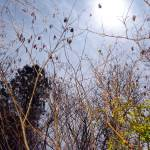 """Moony Moon moon 043"" by donnyhouse"