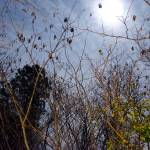 """Moony Moon moon 044"" by donnyhouse"