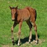"""""""Baby Foal"""" by JMcCoubreyPhotography"""