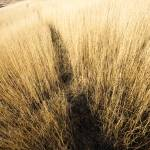 """Oregon Trail"" by marvinbowen"