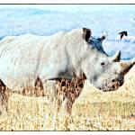 """Rhino Pastel"" by useatripod"