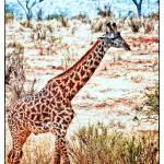"""Giraffe Pastel"" by useatripod"