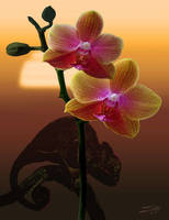 Orchid and Chameleon in Sunset