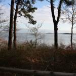 """""""Pine Tree Silhouette.01"""" by JBTurek"""