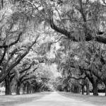 """Avenue of Oaks, Charleston, South Carolina"" by StephsShoes"