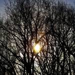 """Low Winter Sun (1745-2)"" by Fotofrieze"