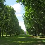 """Green Park"" by vldavis"