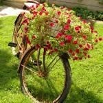 """Old Bicycle Flower Holder"" by artbyjocelyn"