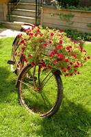 Old Bicycle Flower Holder