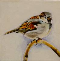 Sir House Sparrow