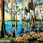 """Florida Cypress Gardens"" by ideaproductions"