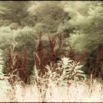 """""""Dreamy Foliage"""" by AprilO"""