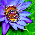 """Lotus Rings"" by lifestillshawaii"