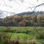 """Autumn in Alton"" by fletcheraimee"
