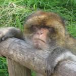 """Monkey"" by fletcheraimee"