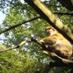 """""""Monkey in Tree"""" by fletcheraimee"""