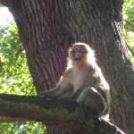 """Happy Monkey"" by fletcheraimee"