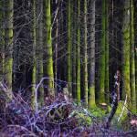 """Glencoe woods"" by ChrisRubey"
