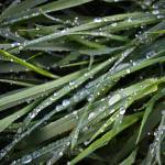 """""""blades of grass"""" by ChrisRubey"""