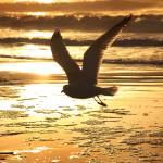 """Flight"" by blance"