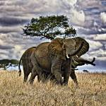 """""""Elephant Sky"""" by useatripod"""