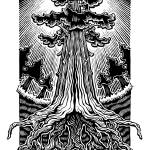 """Redwood Roots"" by beardart"