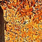 """Autumn Abstract"" by waynelogan"